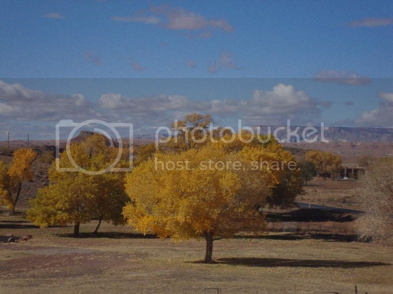 Gold Trees and Black mesa